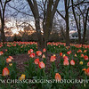 Sherwood Gardens at Dusk