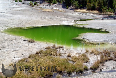 Green Pool, Yellowstone National Park