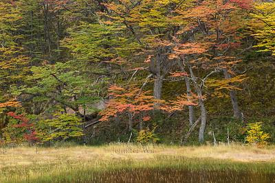 20120412-Patagonia-109  Fall in Patagonia