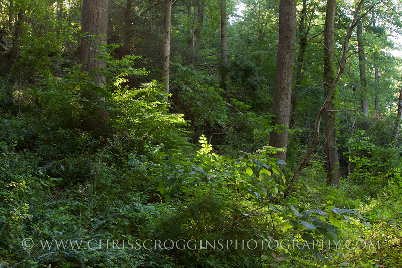 Trail in late Afternoon.<br /> Gunpowder Falls State Park