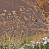 Newspaper rock with flowers