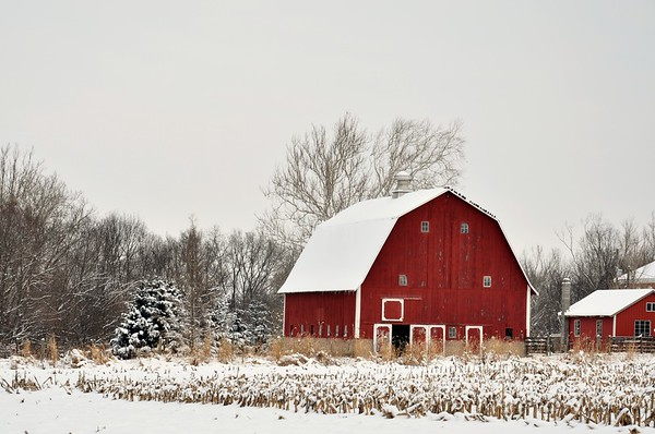 Lovely Red barn with a layer of freshly fallen snow.