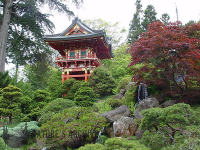 Japanese Tea Garden, San Francisco, CA