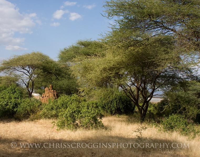 Termite Mound and Acacias