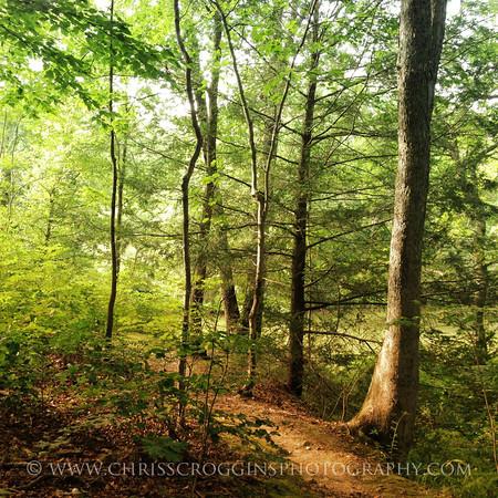 Prettyboy Reservoir Trail