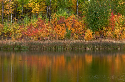 Islet Lake, in the Aspen Parkland of Beaver Hills, Alberta.