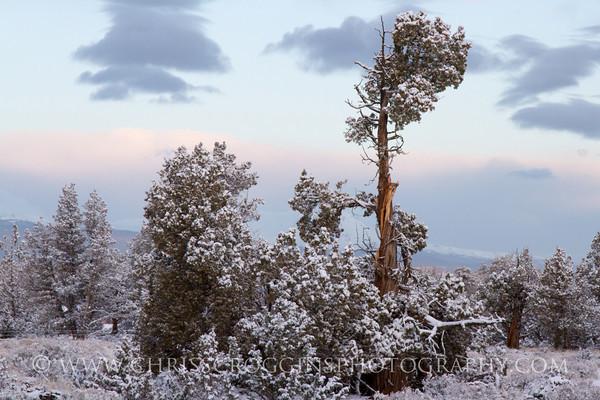 Early Morning Snow,<br /> Oregon High Desert.