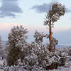 Early Morning Snow,<br /> Oregon High Desert.