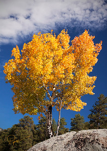 0514 Colorado Gold-Colorado Series _1