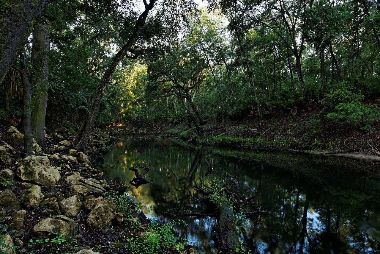 Aucilla River - Middle Aucilla Conservation Area, Florida