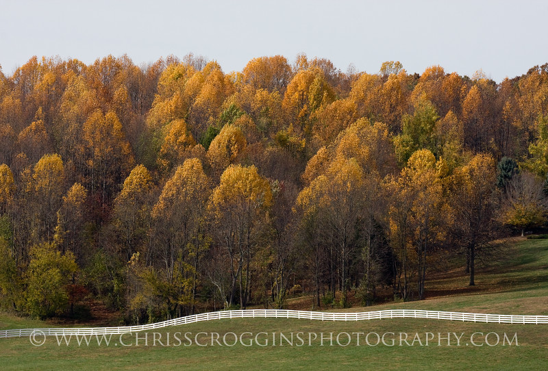 Piney Hill Trees Maryland