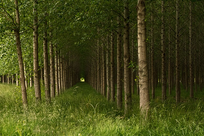 """""""The Woods are Lovely, Dark, and Deep..."""""""