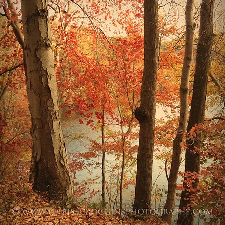 Prettyboy Reservoir Trees