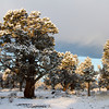 Snow and Juniper Trees,<br /> Oregon High Desert.