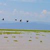 Massai Mara, Kenya<br /> <br /> <br /> <br /> Untitled<br /> by Gary yankech<br /> <br /> What if I could fly like a soaring bird?<br /> I might sail across the vast open sea<br /> What if I roared like a powerful lion?<br /> I could be majestic and free<br /> What if I ran like the fastest cheetah?<br /> I would race beyond the plains and grass<br /> What if we made the world full of grey concrete?