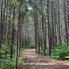 Walking through the forest on the Logging Museum Trail in Algonquin Provincial Park