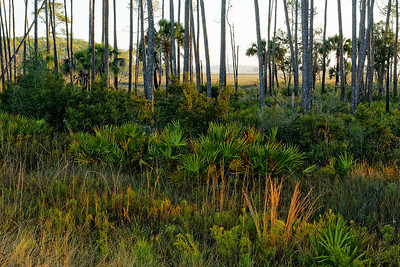 Wetlands Vista - St. Marks NWR, Florida