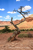 A scene at Capitol Reef National Park