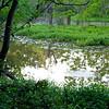 Unkie's Pond