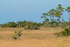 210123 - 2906 Everglades National Park, FL