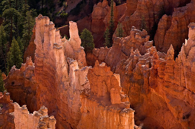 Bryce Canyon National Park 20070428_Bryce_157