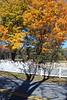 Fall scene pics 002