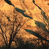 Shadows- Theodore Roosevelt NP