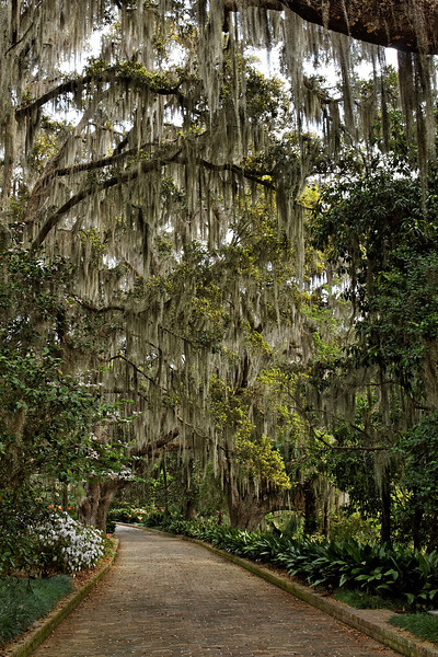 Live Oak Path (the House Walk) - Alfred B. Maclay Gardens State Park, Florida