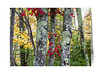 Colorful New England Autumn Trees cards.<br /> Acadia National Park, Maine.