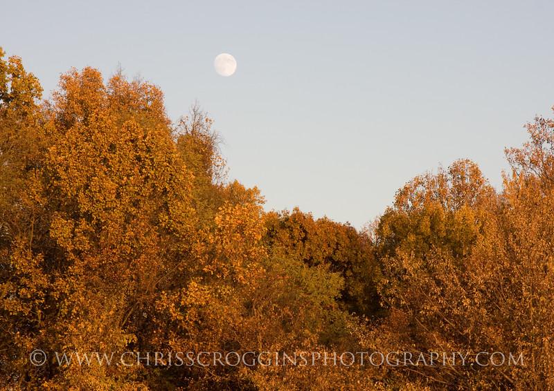 Waxing Autumn Moon