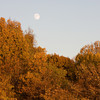 Waxing Autumn Moon