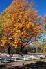 Fall scene pics 005