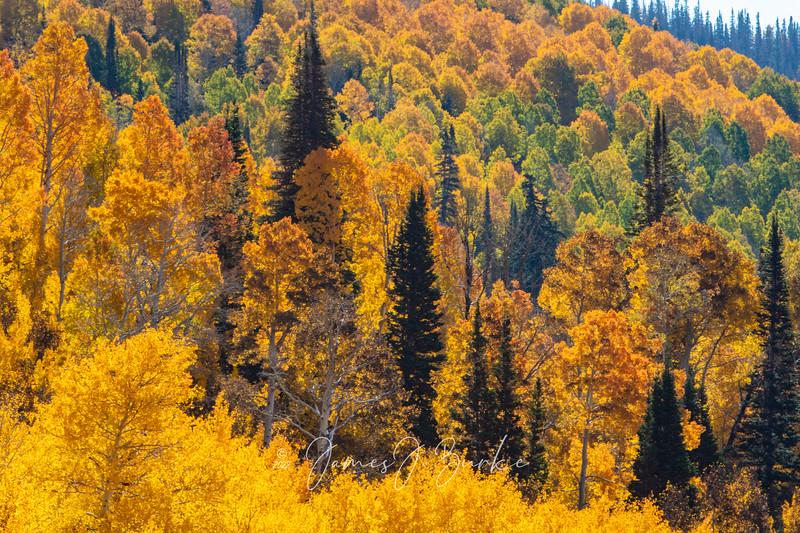 Backlit Beauty of Fall