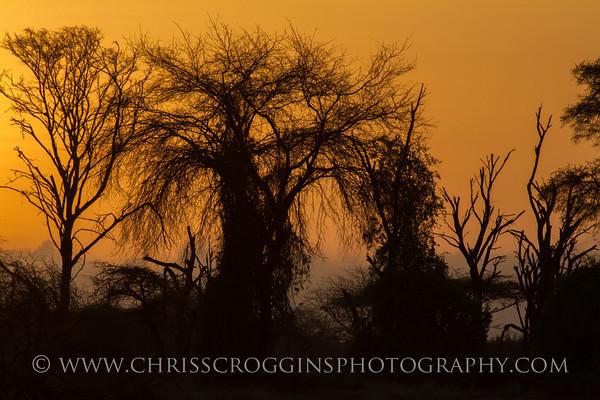Samburu Africa Sunrise