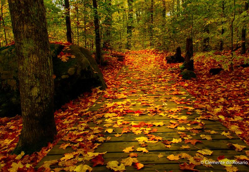 Fall in Algonquin Provincial Park, Ontario