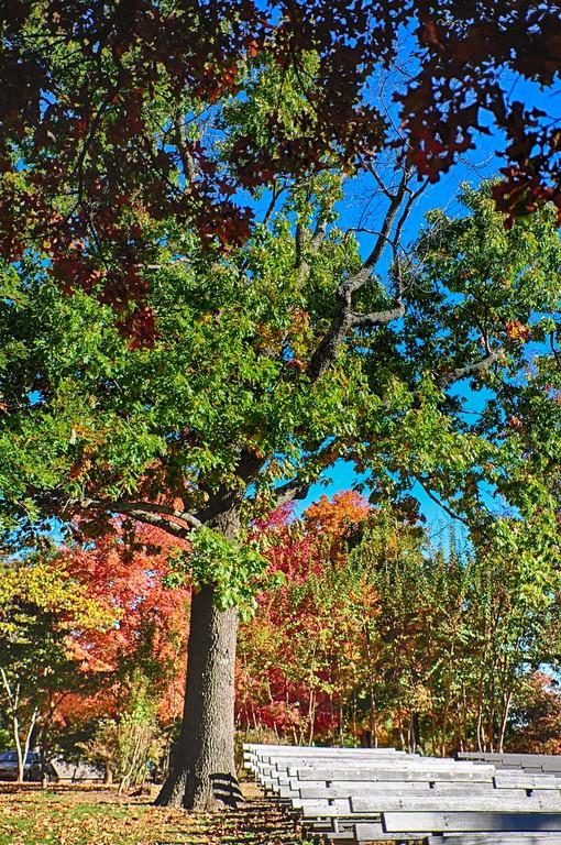 2014 Fall Foliage-4
