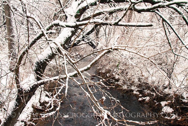 Deep Run in winter 3