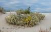 151007 - 6167 White Sands National Monument Park - NM