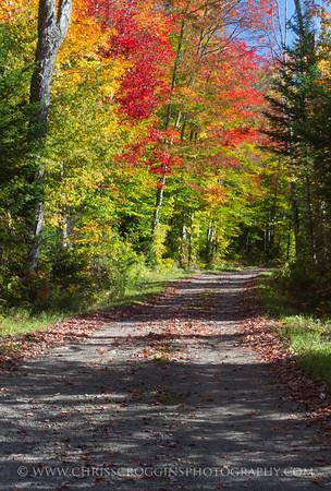 Country Road NY 3