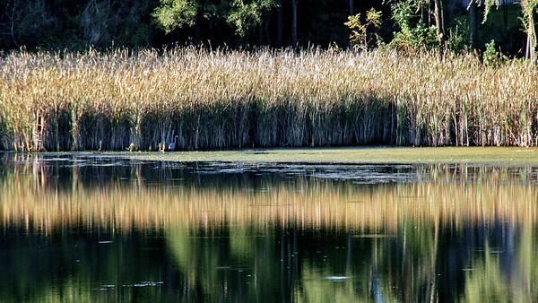 Lake Z pond DSC02772