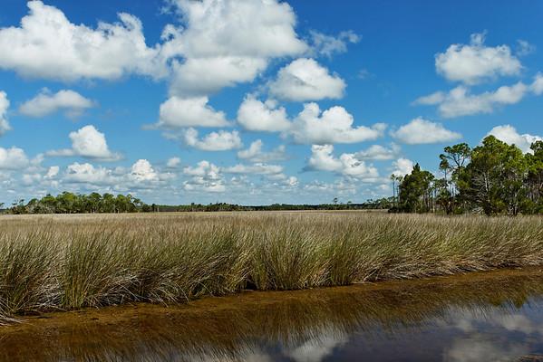 Wetlands - St. Marks NWR, Florida
