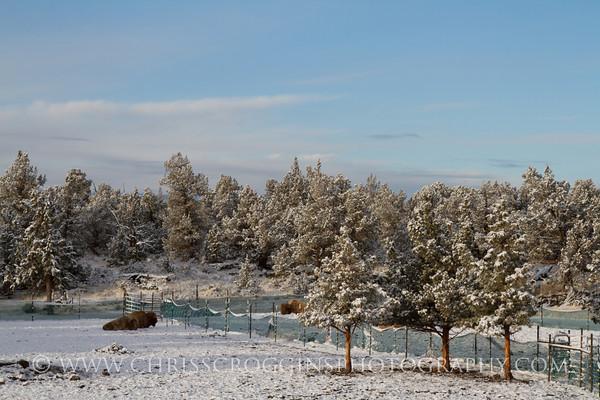 Snowy April Morning.