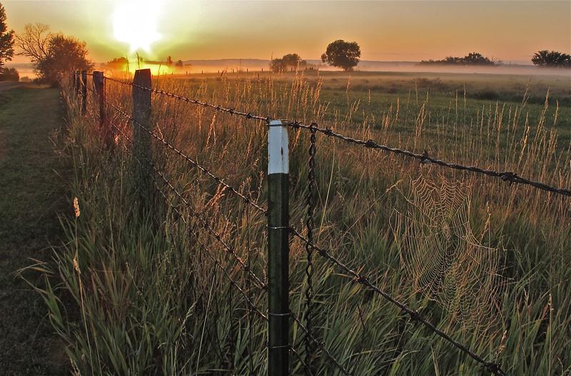 Web on sunrise fenceline