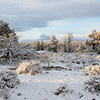 Spring Snowfall,<br /> Oregon High Desert.