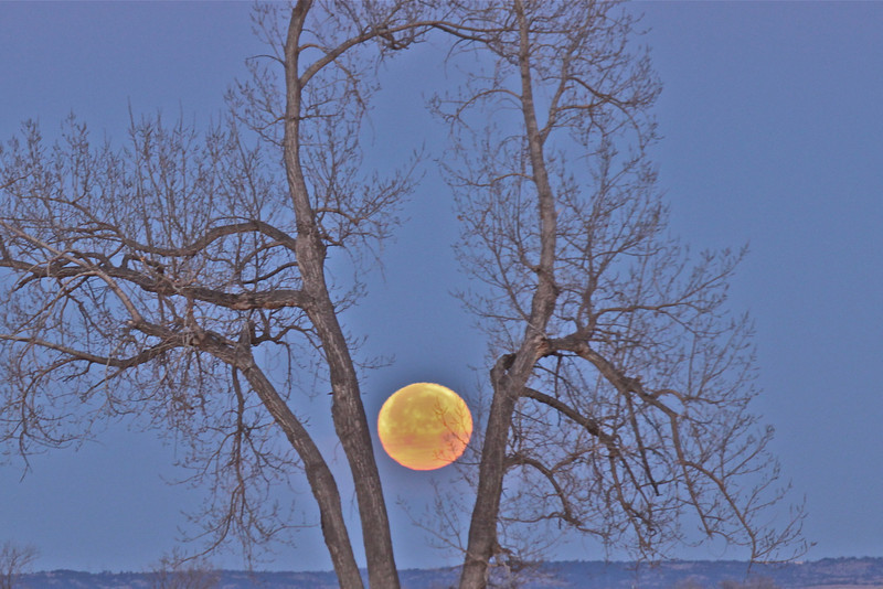 Cottonwood Full Moon