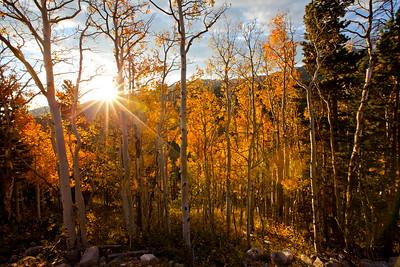 Sunrise through the fall aspens, Estes Park, CO.