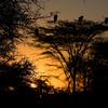 Sunrise Ndutu Tanzania