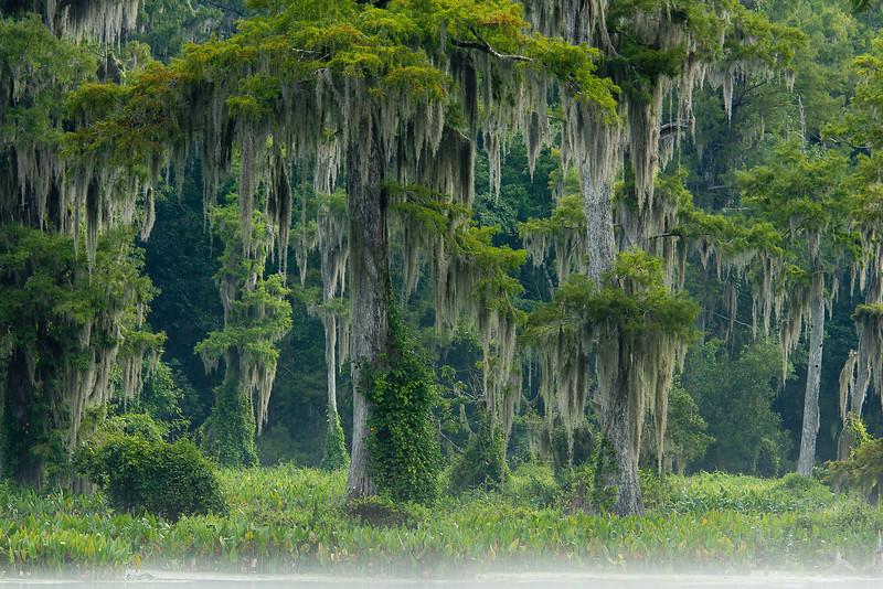 Wakulla Springs in Mist - Wakulla Springs State Park, Florida