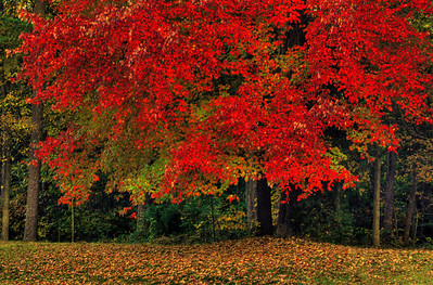 autumn renaissance - original
