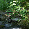 Sunlit Stream,<br /> Gunpowder Falls State Park. <br /> Hereford, Maryland